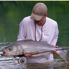Stripers on the fly in rivers. Pen Fishing Rod, Carp Fishing Bait, Trout Fishing Tips, Fishing Videos, Fishing Guide, Sea Fishing, Bass Fishing, Fishing Trips, Fishing Tournaments
