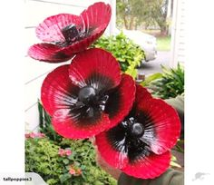 3 BIG POPPIES~ By Wayne Morrison ~ MIXED HEIGHTS | Trade Me