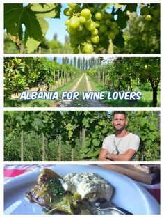 Albanian wine is known for its delicious, sweet taste. Here's how one biodynamic farm in Albania is producing some of the best organic wine in the country. http://luggageandlipstick.com/albanian-wine/