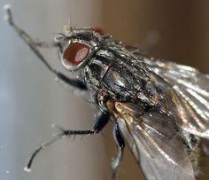 Makro einer Fliege
