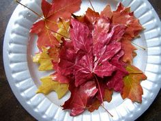 about preserving autumn leaves  - soak in solution of 1 part glycerine 2 parts water for 2 days