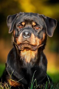 Apollo, Spartan, or Zeus might make for a few creative Rottweiler names for this large beauty. Find more unique names for boys and girls from this breed here>>> http://www.dog-names-and-more.com/Rottweiler-Names.html