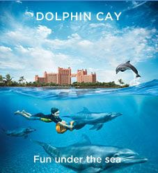 Chad and I did this. Was on the Bucket List and TOTALLY worth the money! Amazing experience. Swam with a dolphin that was displaced from Hurrican Katrina and Atlantis saved them all and transported them and took care of them!