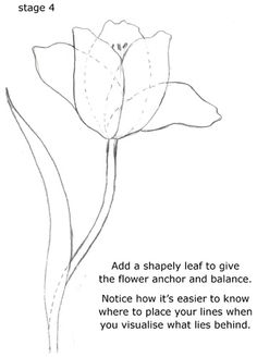tutorial- drawing flower shapes