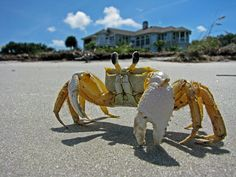 Crabby On The Beach via Flickr