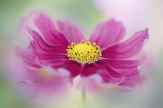 Cosmos Curls by Jacky Parker on 500px