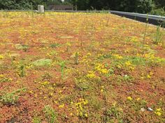 Green roof success