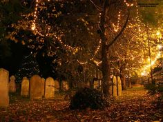 Night wallpaper of a Churchyard at night with Christmas Lights