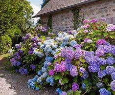 Endless summer hydrangea is one of the most popular summer flowers for the garden. Endless summer hydrangeas are easy to care for, they offer magnificent Hydrangea Varieties, Hydrangea Seeds, Hortensia Hydrangea, Hydrangea Bush, Hydrangea Paniculata, Hydrangea Care, Balcony Flower Box, Fast Growing Flowers, Flower Garden Pictures