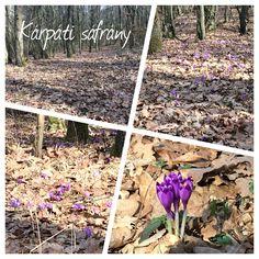 Tavasz első hírnöke