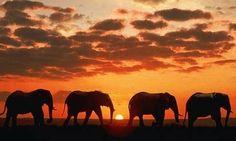Africa.. Africa.. Africa.. travel