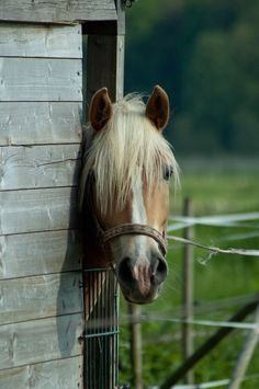 This horse has such a sweet expression