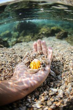 Underwater beach life