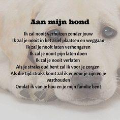 Greyhounds Rescue Belgium v. Dog Quotes, Animal Quotes, Life Quotes, Greyhound Rescue, Rescue Dogs, Aquascaping, Collie, Husky, Chihuahua Names