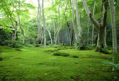 Kyoto's Giouji Temple - Moss Garden - aka: my back yard (or what I should let it become)