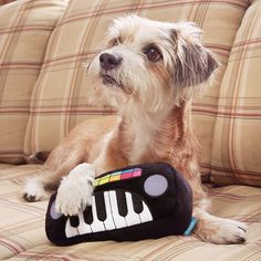 BarkShop recommends Squeaky Wonder Keyboard for your dog! Major in the key of fun. Funny Dog Toys, Cute Dog Toys, Cute Dogs, Christmas Gifts For Pets, Dog Hacks, Pet Grooming, Pet Accessories, Dog Supplies, Dog Care