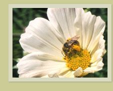 Guide To Bee-Friendly Gardens - Home