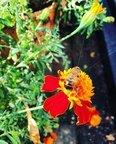 Hängslen livrem säkerhetsbälte eller snarare livlinor? #wasp #insect #nature #marvel #macro #antman #avengers #bee #marvelcomics #comics #hankpym #yellowjacket #art #insects #scottlang #hymenoptera #flower #marveluniverse #marvelcinematicuniverse #bug #GetHashtags #captainamerica #wasps #mcu #giantman #macrophotography #entomology #blackhookahcollection #graffiti #bugs Bellydancer in Sweden