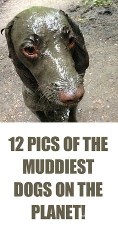 LOL, how did this even happen? These pics are great! http://theilovedogssite.com/the-12-muddiest-dogs-on-the-planet/