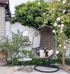 All is calm, all is bright - thanks to the extended amount cleaning I have done! Project 'find cheese' kicks off shortly and then I go and… Woke Up This Morning, Egg Chair, Hanging Chair, Life Is Good, Interior, Outdoor, Garden, Kicks, Sunday