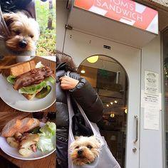 今日はお出かけ🐶🎵代官山のトムズサンドイッチにきたよ〜。クースケはバッグの中でちんまりおとなしくしてたよ✨✨✨ * パパはBLT。私はホクホクポテトとベーコンのサンドイッチ🥓👍 * #トムズサンドイッチ #代官山 #dog #dogstagram  #dogoftheday  #pet  #petscorner  #yorkie  #yorkshireterrier  #yorkiesofinstagram  #doglover #kawaii  #yorkieloversofinsta #ワンコ #ヨーキー #ヨークシャテリア #わんこ #ふわもこ部  #いぬら部 #ヨークシャーテリア #ヨークシャー #todayswanko #愛犬 #わんこなしでは生きていけません会  #犬との暮らし  #犬のいる生活