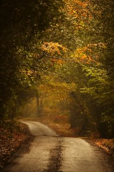 Autumn trees lining rural lane in woods. Photo by Ron Bambridge.
