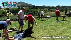 Pragma Boeresports team building event in Stellenbosch, facilitated and coordinated by TBAE Team Building and Events Team Building Events, Team Building Activities, Team Building Exercises, Cape Town, Games, Gaming, Toys
