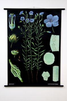 Flax Botanical Chart. www.empiricalstyle.com