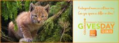 Endangered means we still have time. Can you spare a dollar or dime? Holiday giving is just around the corner, and we are pleased to announce that RMW is participating in #ColoradoGives Day again this year! Colorado Gives maximizes how far each gift goes, as there is a $1 Million Incentive Fund provided by First Foundation and FirstBank! Schedule your gift for #ColoradoGives today to make sure your dollar goes a long way.