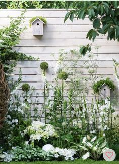 outdoor spaces white wild flower garden