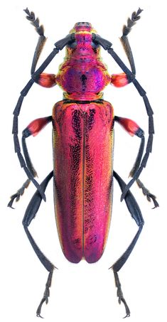 Le plus chaud Totalement gratuit baby Reptiles Concepts Beetle Insect, Insect Art, Beetle Bug, Cool Insects, Bugs And Insects, Longhorn Beetle, Les Reptiles, Cool Bugs, A Bug's Life