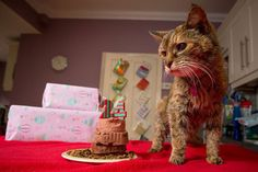 poppy-worlds-oldest-cat-guinness-records-11 at age 24