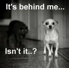 These are the funniest dog memes you ever seen! Funny dog memes images that will make you smile. Animal Jokes, Funny Animal Memes, Dog Memes, Cute Funny Animals, Funny Cute, Funny Dogs, Funny Memes, Funny Sayings, Funny Chihuahua