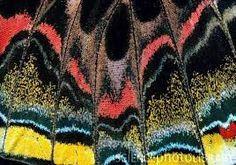 Bildergebnis für close up butterfly wings