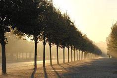 Brume matinale sur le parc de Versailles