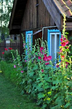 Malwy przed chatą Fairytale Cottage, Garden Cottage, Hollyhock, Rustic Design, Painting Inspiration, House Plants, Outdoor Spaces, Outdoor Gardens, Outdoor Structures