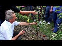 Ivan Hričovský: Úprava mladej hrušky rezom - YouTube Youtube, Fruit, Flowers, Plants, Gardening, Lawn And Garden, Plant, Royal Icing Flowers, Youtubers