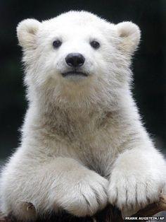 Polar Bear Cub!!!!!