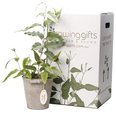 our new growing gifts packaging :) www.growinggifts.com.au