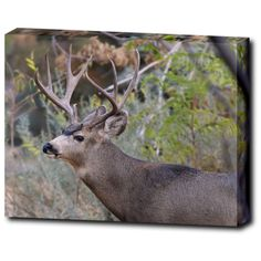 Buck Wall Art Gallery Canvas Wrap, Deer Décor, Wildlife Photography