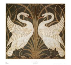 swan illustration - Buscar con Google