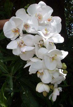 Buquê cascata orquídeas