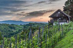 Doljenska, Slovenia for Alpe Adria Magazine Organic Farming, Slovenia, Vineyard, Logo Design, Magazine, Poster, Travel, Outdoor, Voyage