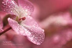 raindrops by Ukari324 #nature #photooftheday #amazing #picoftheday