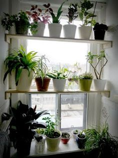Plants instead of curtains...love it!