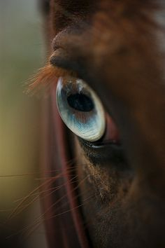 #Horses, #Eyes, #Animals