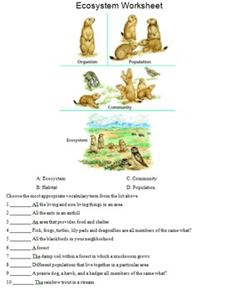 Printables Predator Prey Worksheet predator prey worksheet and worksheets related food web webs teaching ecosystems bioticabiotic predatorprey chainfood worksheetpredator a