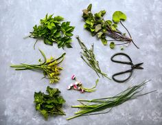 Ätbara blommor, ogräs, blad och skott Magic Herbs, Housekeeping Tips, How To Make Jam, Skott, Edible Flowers, Medicinal Plants, Raw Food Recipes, Green Leaves, Garden Plants