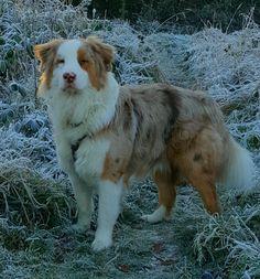 Hunde Foto: Silvia und Yuma - Früh am Morgen Hier Dein Bild hochladen: http://ichliebehunde.com/hund-des-tages  #hund #hunde #hundebild #hundebilder #dog #dogs #dogfun  #dogpic #dogpictures
