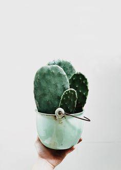 Inpiration And Creative DIY Cactus Planters You Should Copy Right Now Cacti And Succulents, Planting Succulents, Planting Flowers, Cactus Planters, Cactus Pot, Cactus Decor, Vert Pantone, Plants Are Friends, Pot Plante